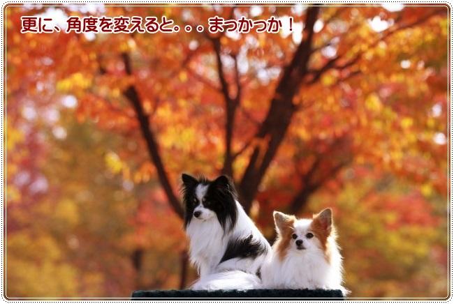 2IMG_3638.jpg