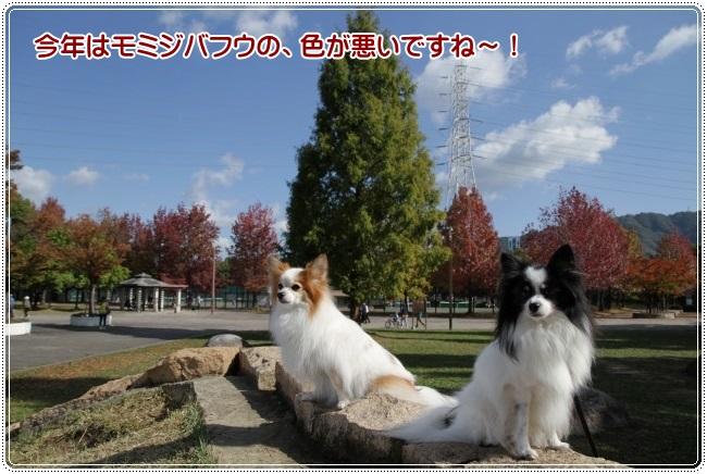 IMG_8757.jpg