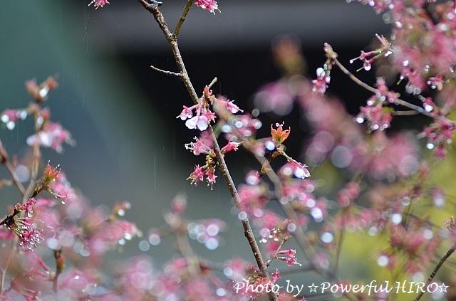 雨の庭先 (2)