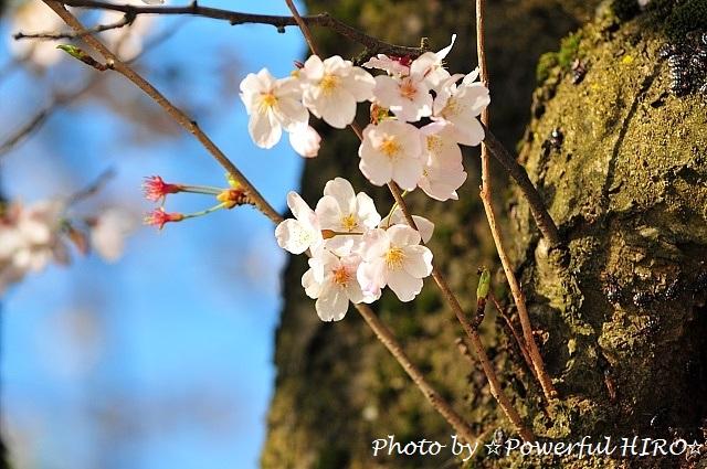 花見休日 (3)