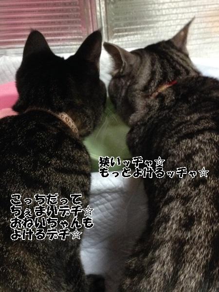 IMG_0106 - コピー (2)