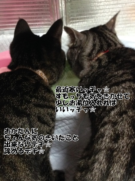 IMG_0106 - コピー