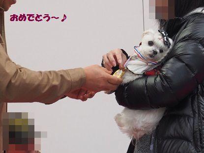 のあ ドッグコレ (10)