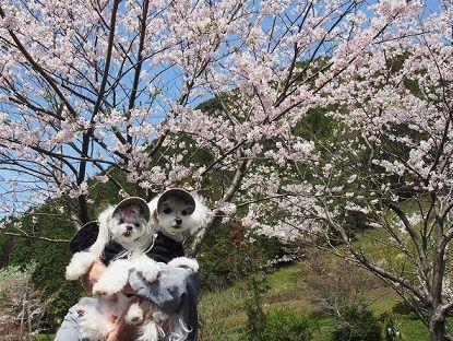 桜 (9)