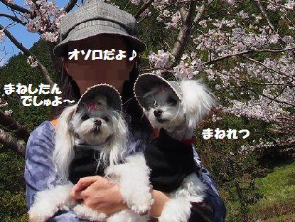 桜 (10)