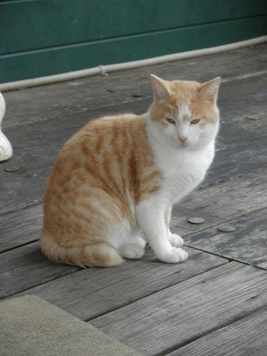 大島の猫2