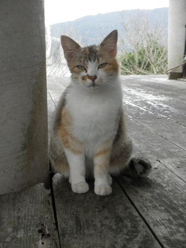 大島の猫4