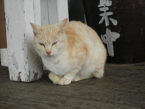 大島の猫6
