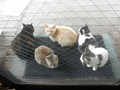 大島の猫8
