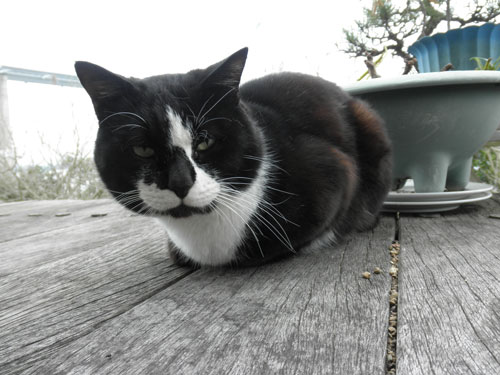 大島の猫5