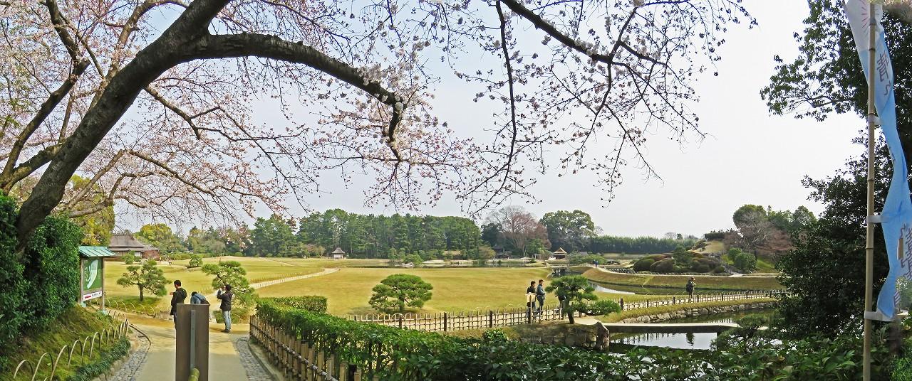 s-20160330 後楽園南門を入って直ぐの場所の桜の花の様子ワイド風景 (1)