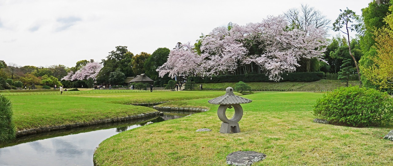 s-20160405 後楽園今日の園内曲水越しに眺める桜満開のワイド風景 (1)