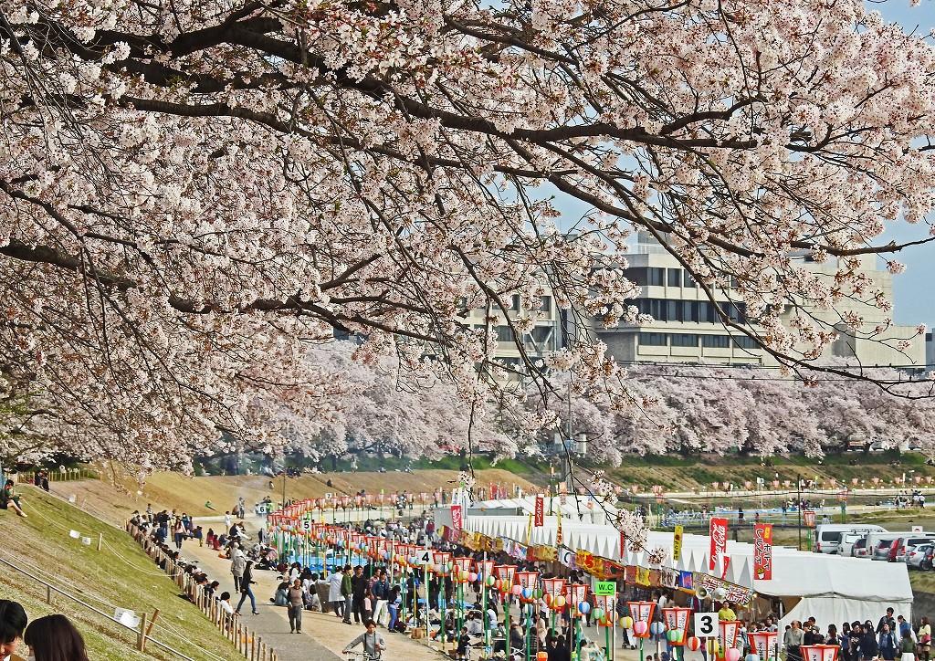 s-20160406 岡山さくらカーニバル最終日の午後の様子 (1)
