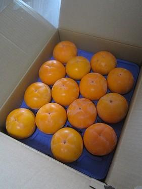 20151029みしらず柿