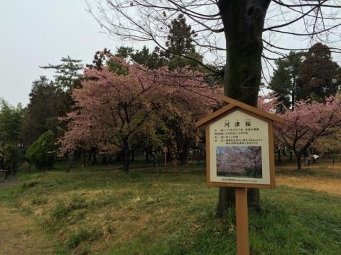 万葉公園002