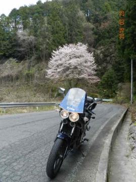 20160328桜005