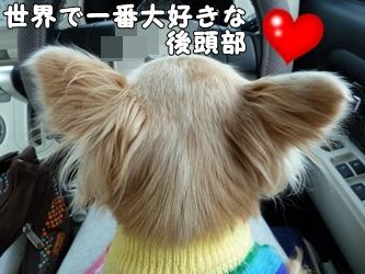 ブログ用024-2015 12 14-161300