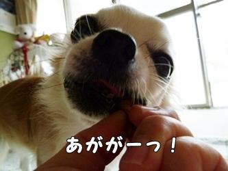 ブログ用021-2015 10 09-123013