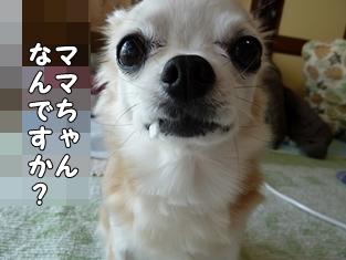 ブログ用018-2016 02 21-122214