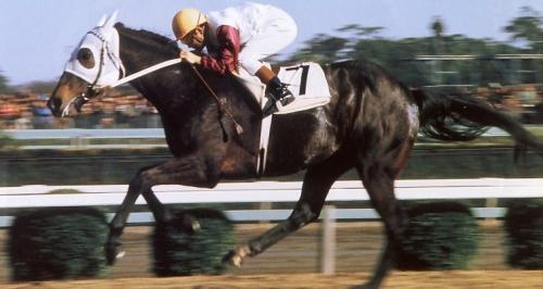 【競馬ネタ】一番最初に覚えた馬名は?