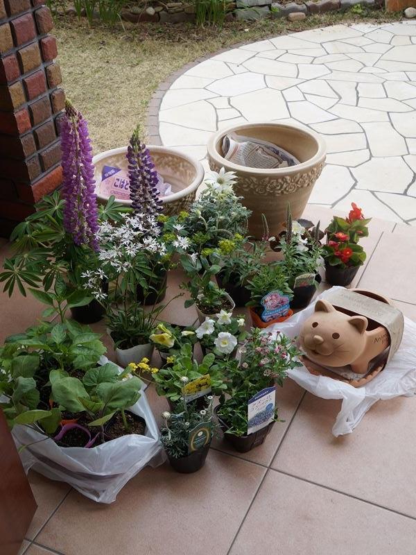 新入りの花と鉢