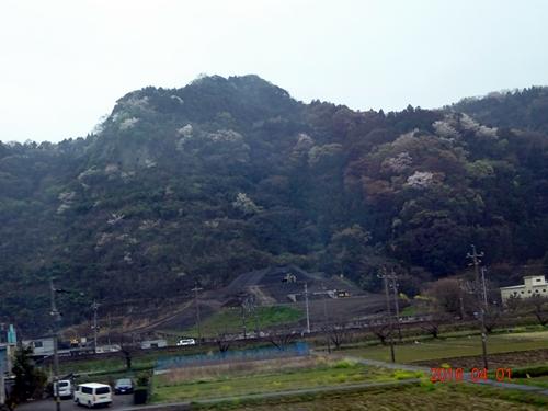 DSC05287帰路の新幹線から山桜