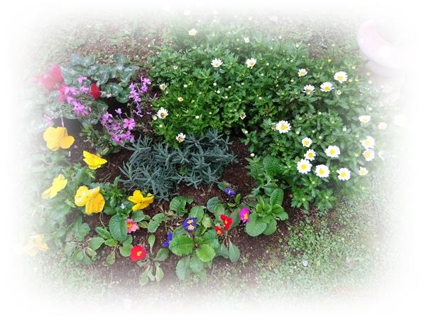 DSC05377越冬花壇
