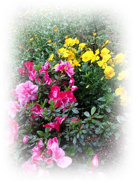 DSC05372越冬花壇2