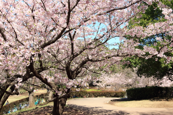IMG_7363ふるさと公園 春ふるさと公園 春