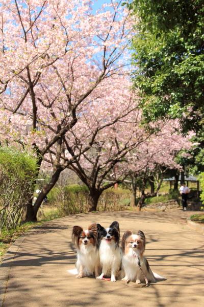 IMG_7346ふるさと公園 春ふるさと公園 春