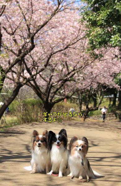 IMG_7345ふるさと公園 春ふるさと公園 春