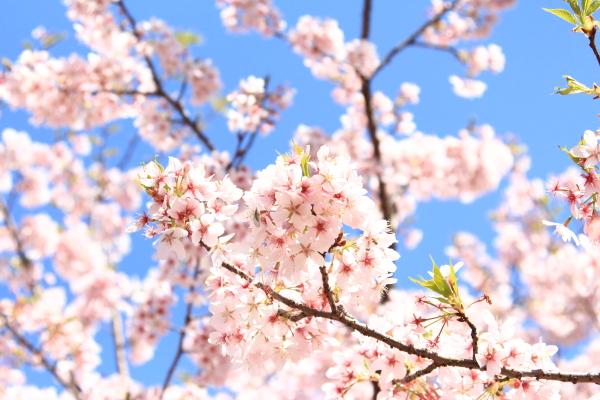 IMG_7355ふるさと公園 春ふるさと公園 春
