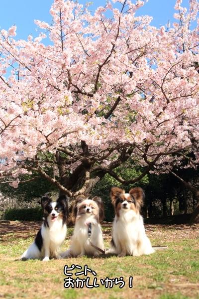 IMG_7352ふるさと公園 春ふるさと公園 春