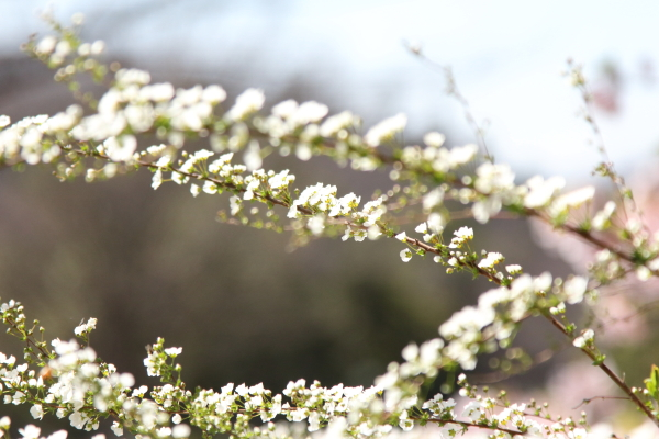 IMG_7399ふるさと公園 春ふるさと公園 春