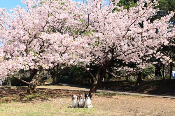 IMG_7360ふるさと公園 春ふるさと公園 春