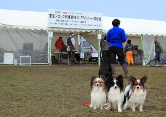 IMG_3521東京ブロック競技会 2016東京ブロック競技会 2016