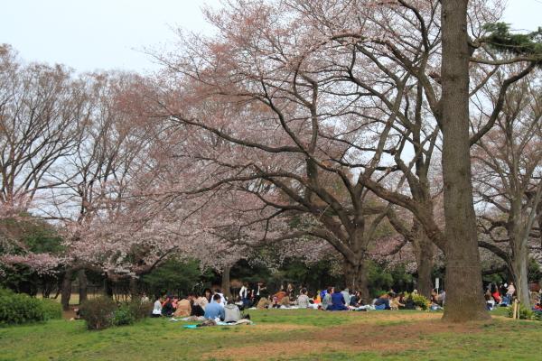 IMG_3836桜満開間近桜満開間近