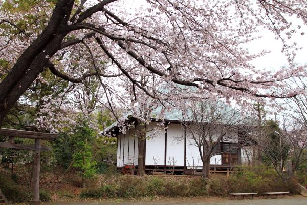 IMG_3959近所の桜1近所の桜2016