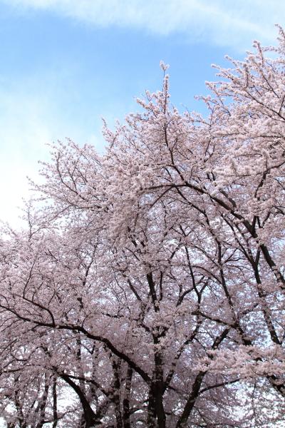 中山八幡山201600000207
