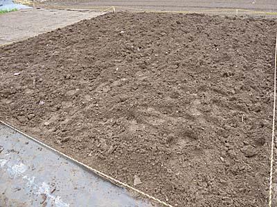苦土石灰をまいた翌週に耕す