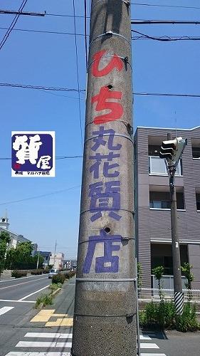 ひち丸花質店_電柱