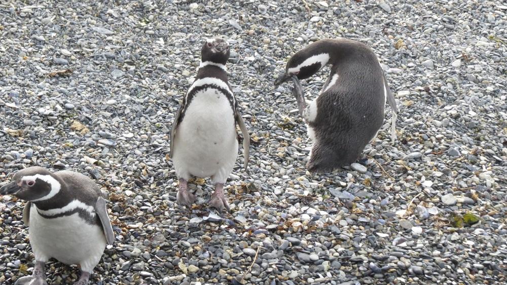 5ペンギンIMG_8835