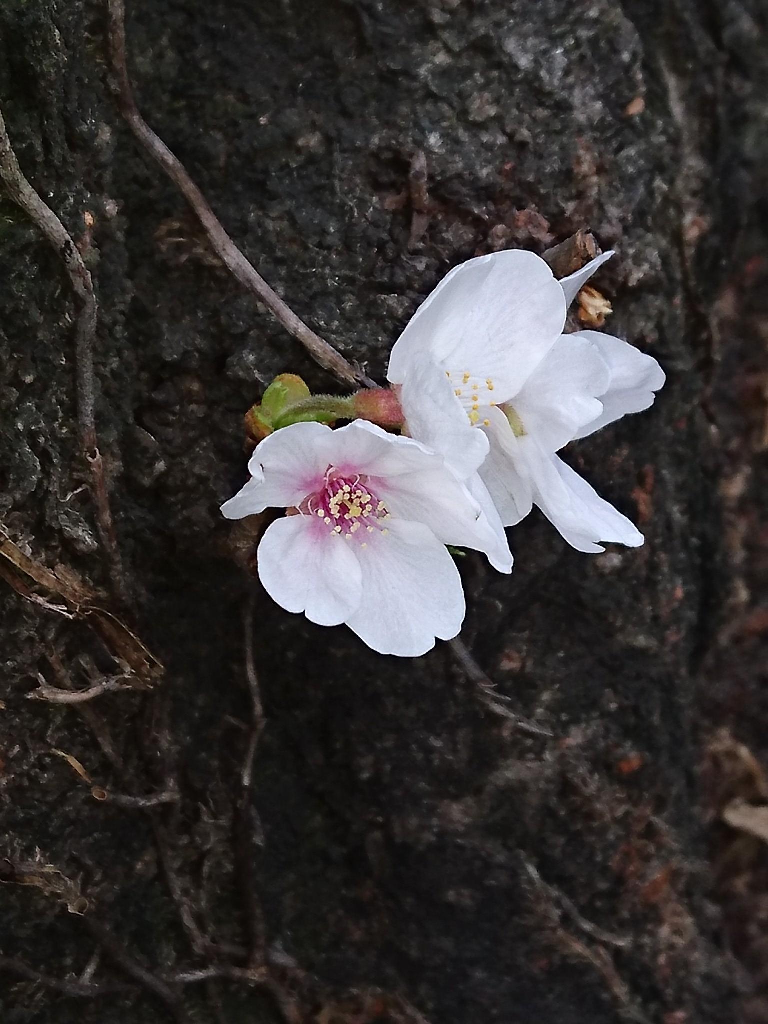 16-03-27-09-07-55-153_photo.jpg