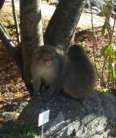〝 猿 〟⑧