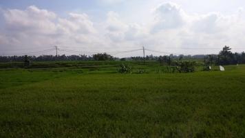 バリの農地