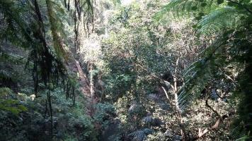 緑のジャングル