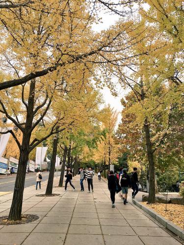 秋深まる。国民大学