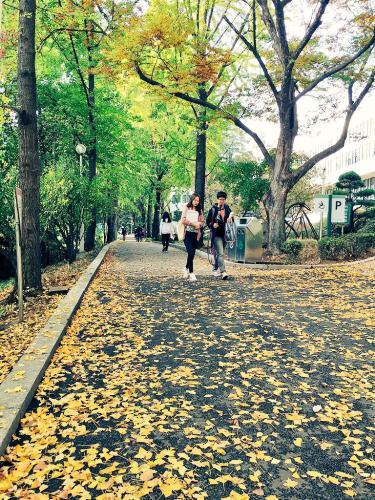 秋はあまりにも短いですね。