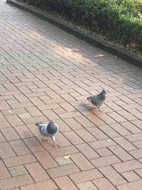 鳩も歩く狎鴎亭ㅎ