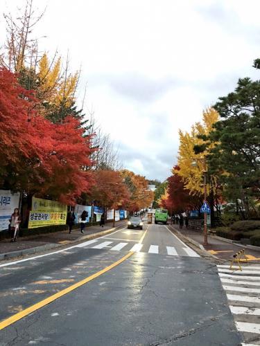 あいにくのお天気でしたがキャンパスの紅葉は見ごろでした^^